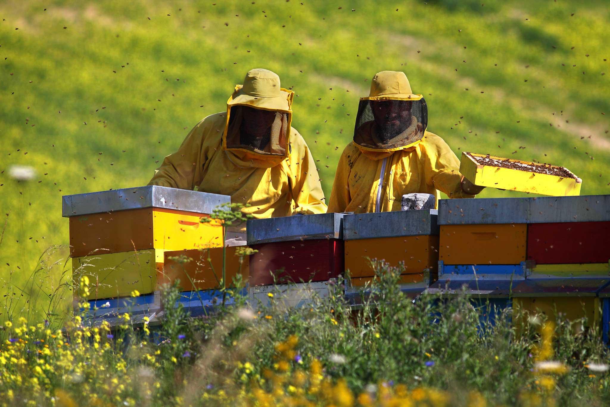 apicoltori a castelluccio di Norcia