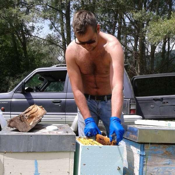 staff posizionamento estrazione arnie api